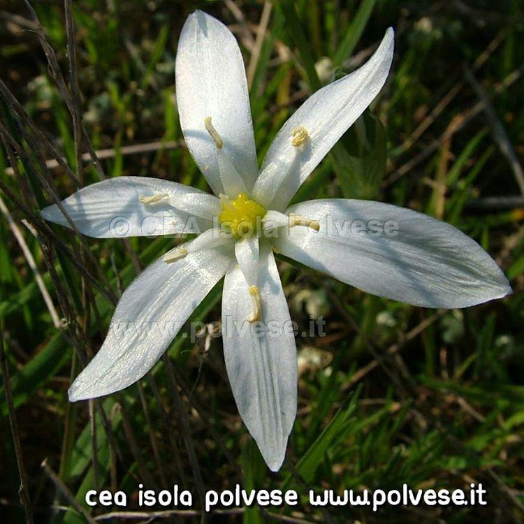 Flora di Isola Polvese