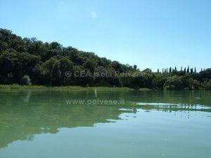La Lecceta di San Leonardo vista dal Lago - Paesaggi e ambienti della Polvese