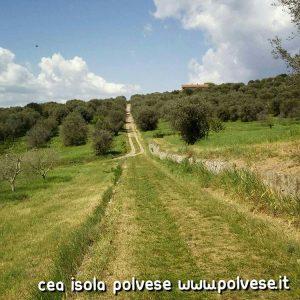 Oliveti e sentieri della Polvese