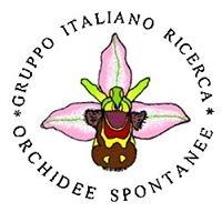 Gruppo Italiano di Ricerca Orchidee Spontanee